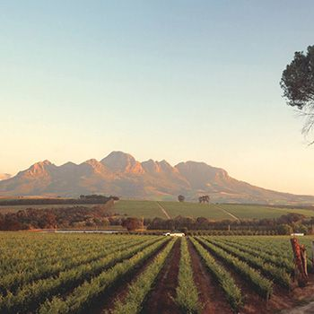 Foto van de wijngaarden